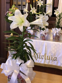 """Easter lily with altar behind it, with """"Alleluia"""" written on the altar cloth"""